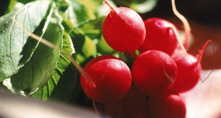 Los rábanos de primavera tienen pulpa crujiente y un sabor suave.