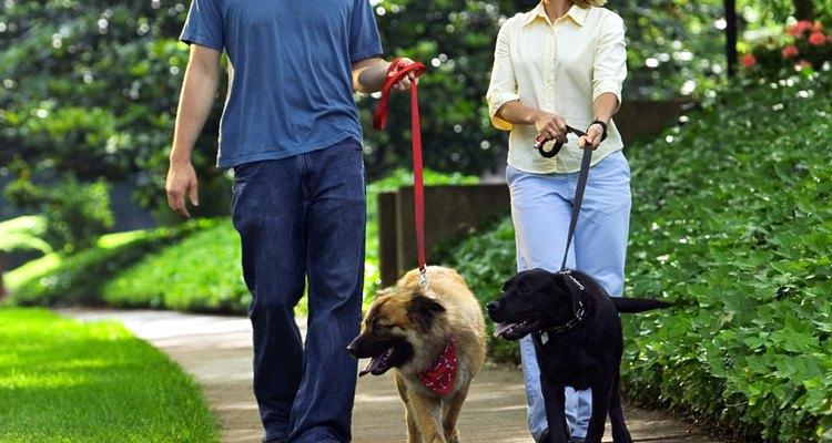Couple walking dogs through park