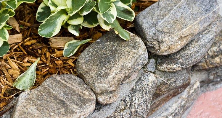 Canteiros elevados permitem que você tenha plantas em locais de solo pobre