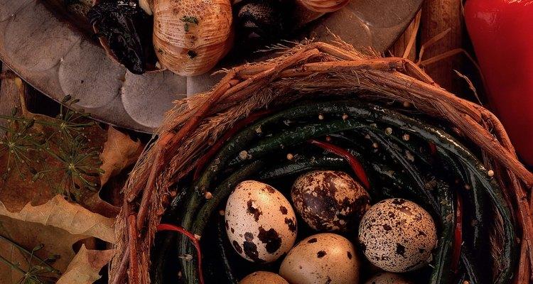 Para chocar ovos de codorna é necessária uma incubadora
