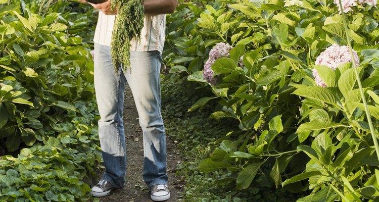 La diversidad de plantas necesita mucho tiempo para desarrollarse.