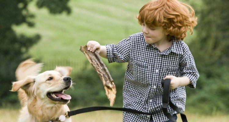 Aplica presión con un paño caliente y húmedo en los ojos de tu perro.