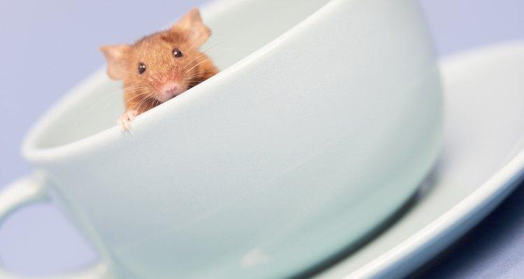 Los ratones pueden saltar hasta 12 pulgadas (30,48 cm) en vertical e incluso pueden viajar colgados boca abajo.