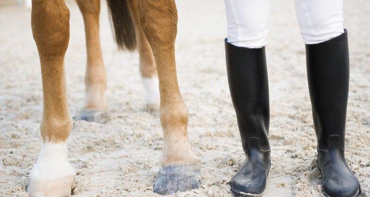 Splints pop on a horse's lower leg, below the knee, on front and back legs.