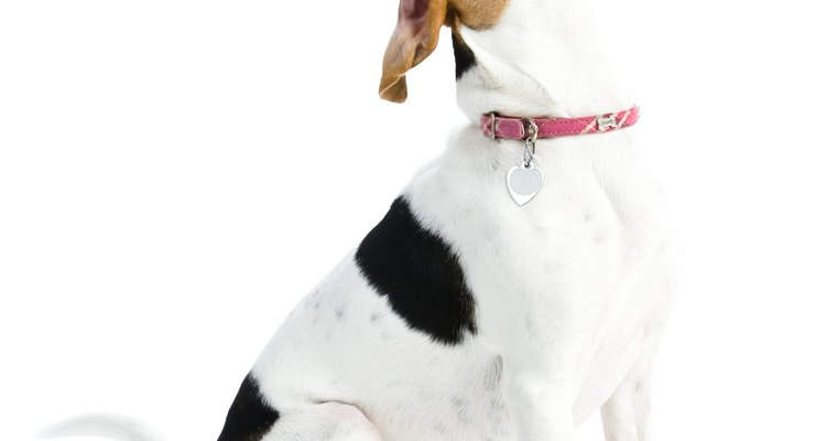 Give your dog a treat after the first time walking with a slip lead.