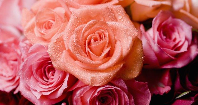 Las flores son ideales para decorar espacios.