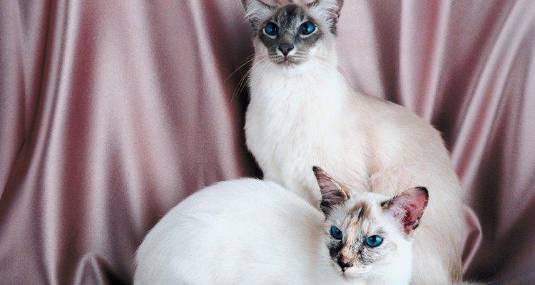 Los cuidados del pelo del gato dependerán de las características del animal.
