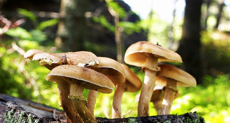 Wild mushrooms can be poisonous.