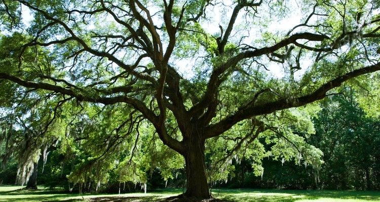 Las ramas de los árboles son hermosas hasta que una cae en un coche o una persona.