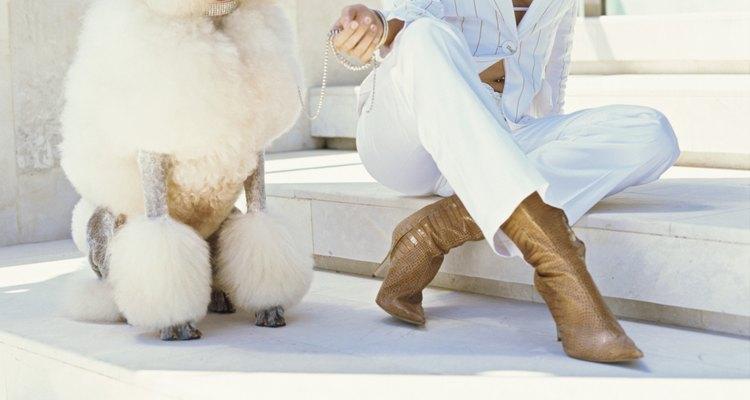 El poodle como símbolo de elegancia canina.