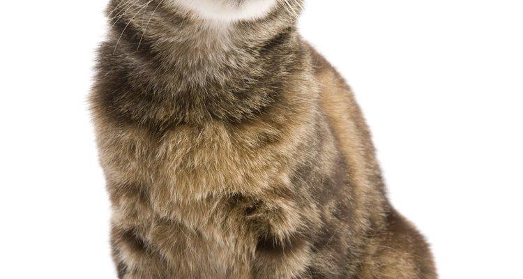 Se pueden aplicar enemas para felinos regularmente a los gatos de edad avanzada con problemas intestinales.