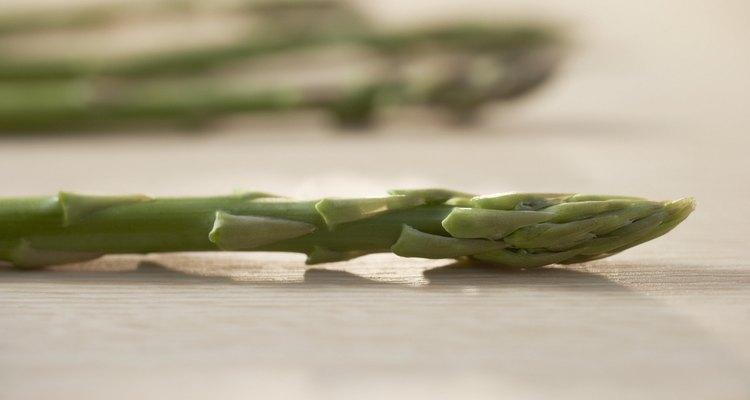 Cross Section of Asparagus Stem