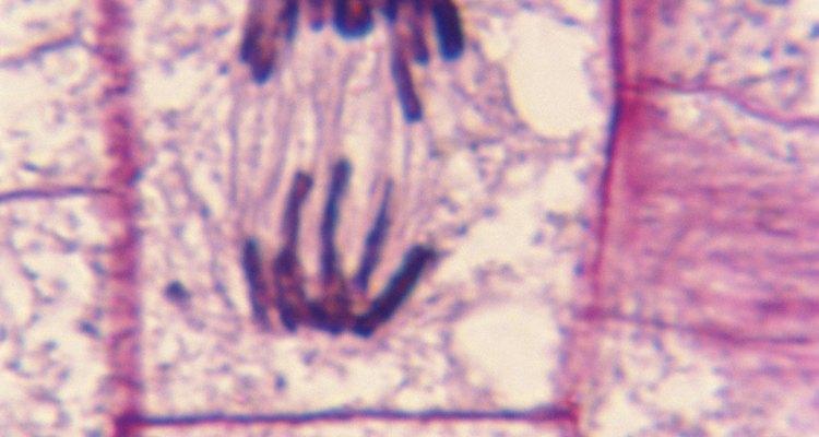 La difusión es un proceso biológico importante en la vida de una célula.