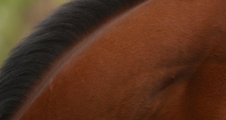 A seborreia costuma criar uma substância semelhante à caspa perto da crina ou da cauda do cavalo
