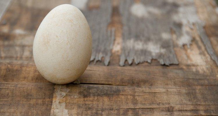Lançadores de ovos variam em distância e altura que podem lançar os ovos