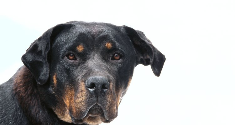 Aprende algunos trucos para evitar que tu perro mate gatos.