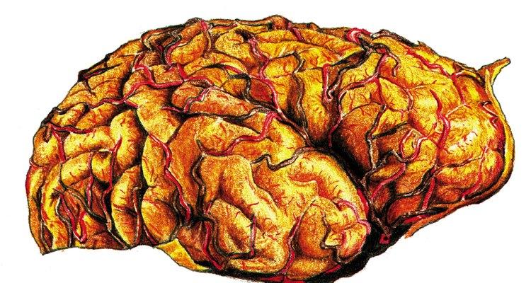 O vírus da raiva tem uma alta afinidade pelos tecidos nervosos