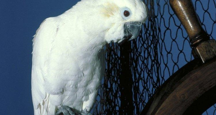 Check-ups regulares podem ajudar na detecção precoce de doenças em aves