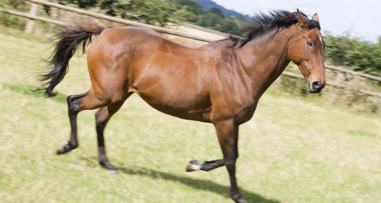 El caballo tiene un ciclo de vida que se puede dividir en cuatro fases bien diferenciadas.