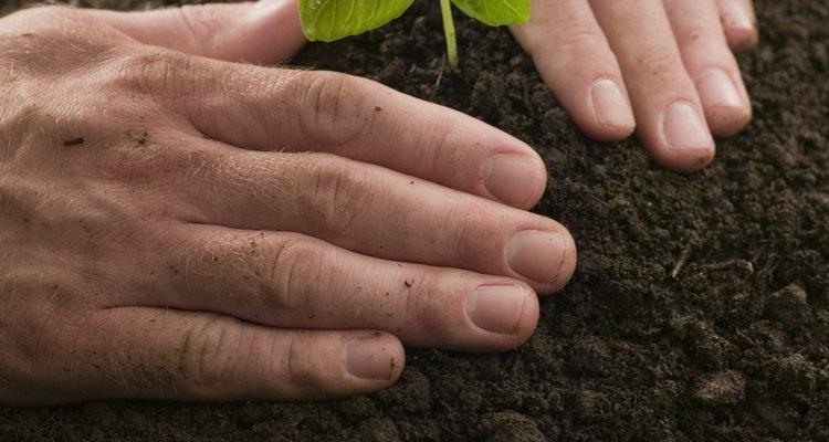Algunas plantas contienen diosmina.