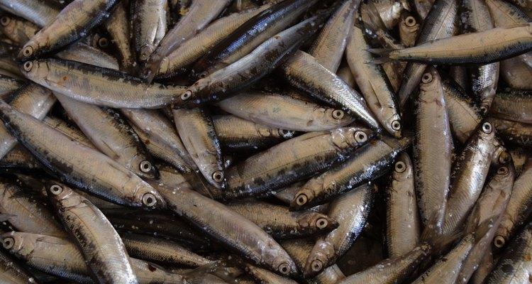 As anchovas podem ser encontradas nos oceanos e em água doce