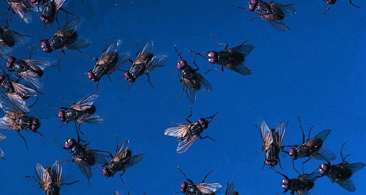 Muitos tipos de moscas são atraídas por esgoto e sujeira