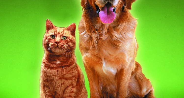 Alguns produtos de enxofre podem ser usados perto de animais para matar infestações de pulgas