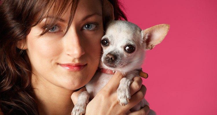 Chihuahua y su dueño.