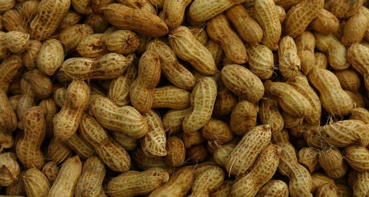 Las vainas de cacahuete contienen maní, que son las semillas de la planta.