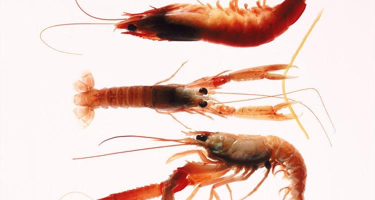 Reproducción del camarón.