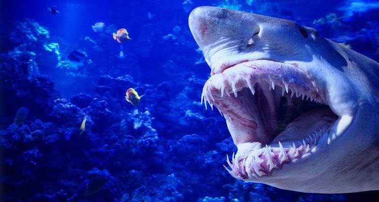 Los tiburones salían por los mares carboníferos en busca de comida más de lo que lo hacen hoy en día.
