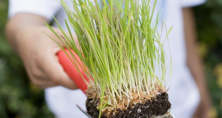 Pedaço de solo com grama