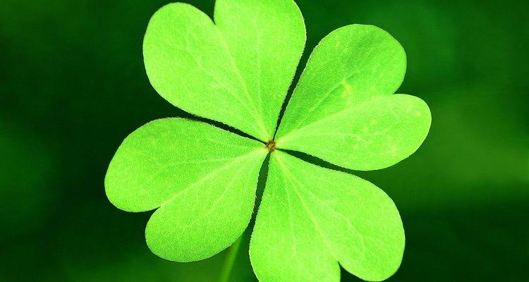 Preserve your four leaf clover as a good luck charm.