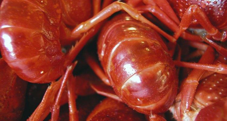 O lagostim é uma iguaria Cajun