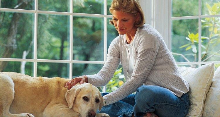 Saiba o que fazer quando seu cão estiver se sentindo enjoado