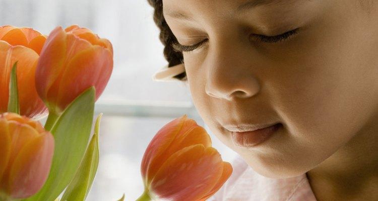 Muestra tulipanes a estudiantes de kindergarten ya que las piezas grandes de la flor son fáciles de identificar.