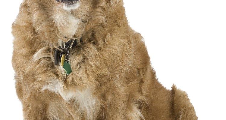 Los perros de servicios frecuentemente se entrenan para defecar cuando se les ordena.