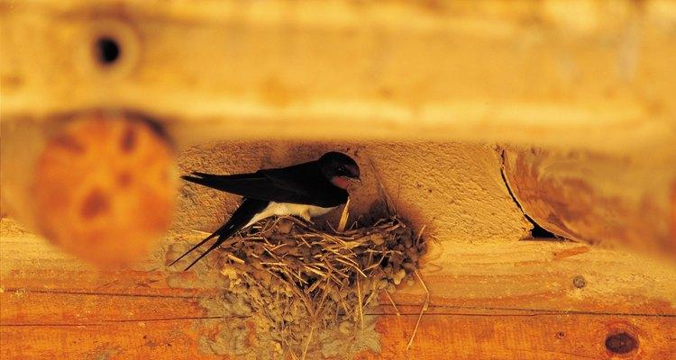 Las aves puede construir nidos en sitios donde se convierten en problemas de salud.