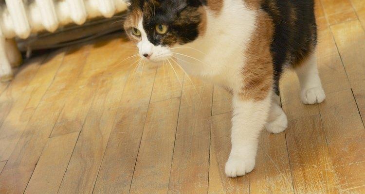 É possível remover o cheiro da urina de gato mesmo de pisos de pedra natural