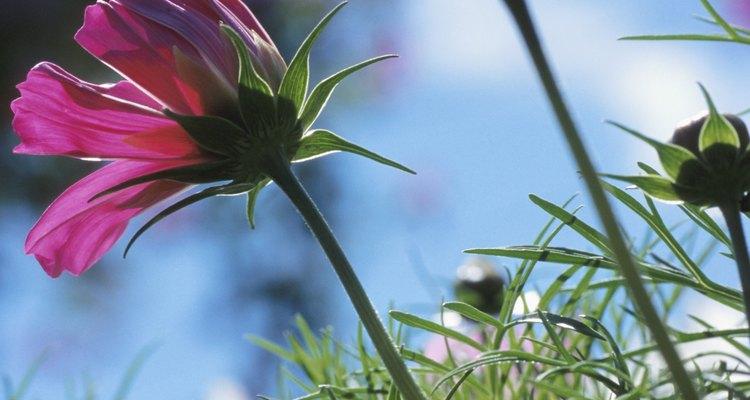 Las flores se benefician de más fósforo y potasio en el suelo.