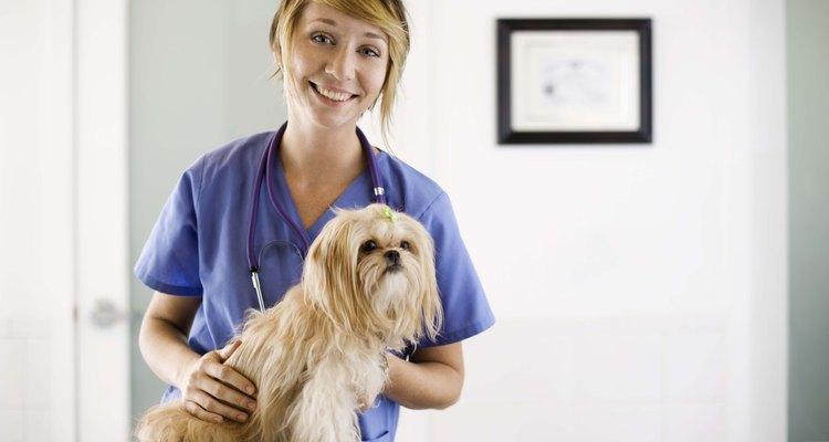 Saiba reconhecer os sinais de infecção em uma mordida de cachorro