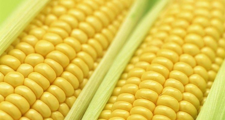 É fundamental retirar o milho da dieta do seu cão