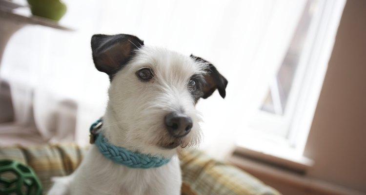 Como reconhecer e tratar cãibras em cães