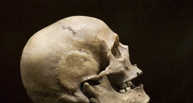 In a pivotal scene, Hamlet holds the skull of his old court jester.