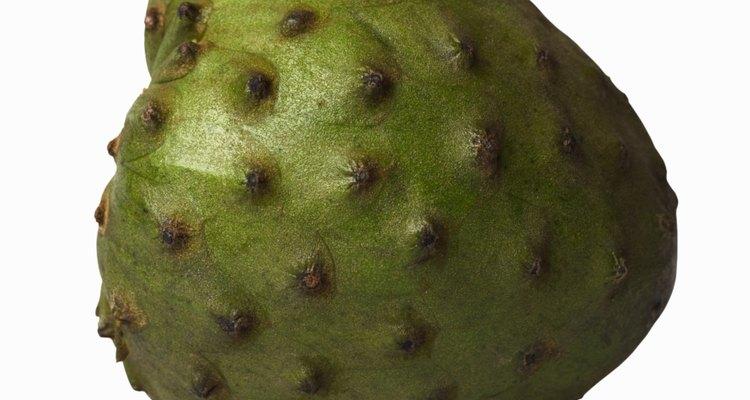 La chirimoya es un árbol perenne de crecimiento rápido.