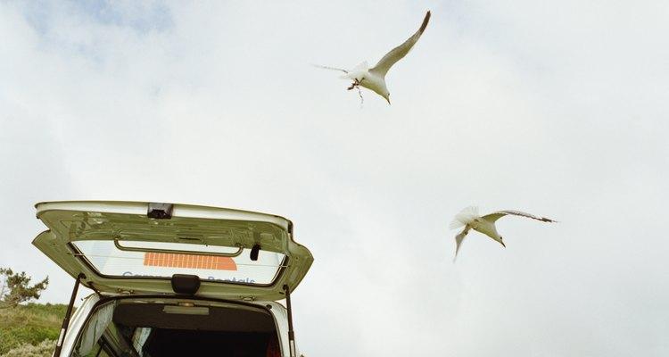 Si ves otras aves volando alrededor, aléjate sin tocar al pajarito que está en el piso.