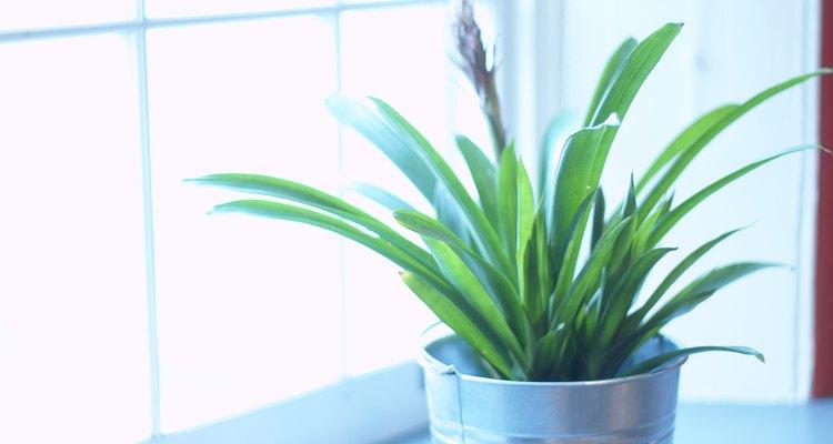 Replanta las plantas para deshacerte de las larvas de gusano.