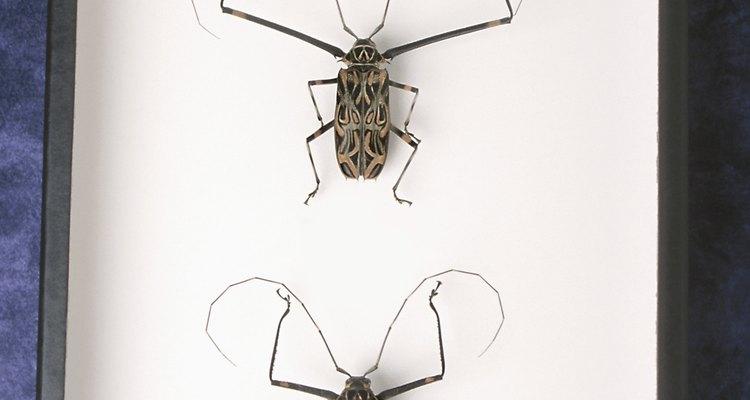 Cuidado na hora de proteger sua casa de insetos