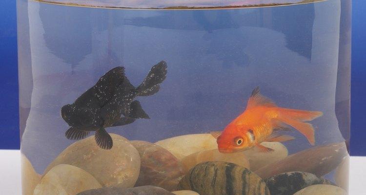 Um peixe doente geralmente muda sua cor