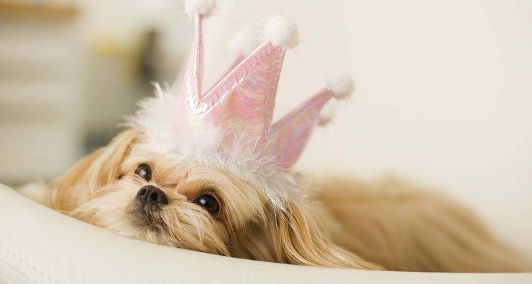 Con un poco de creatividad y tiempo, puedes hacerle a tu perro un traje del que estarás orgullosa.
